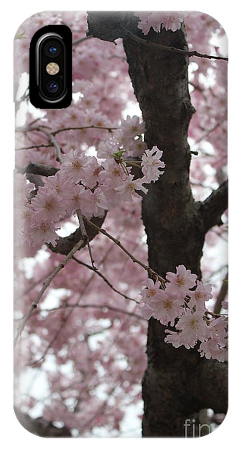 Blossoms IPhone X Case featuring the photograph Spring Beauty by Stephanie Hanson