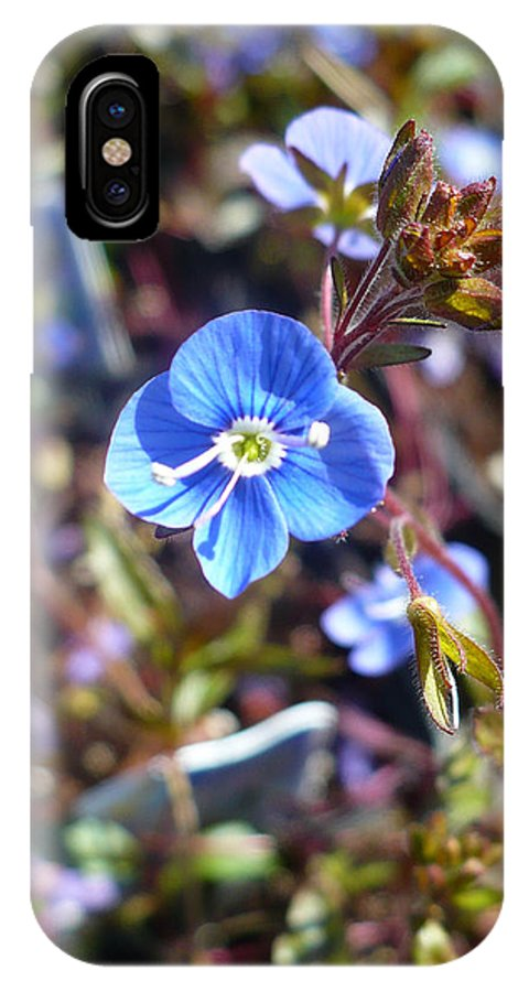 Floral IPhone X Case featuring the photograph Spring Blooms Of 2013 F by Nicki Bennett
