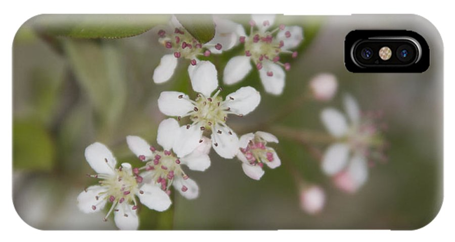 Spring IPhone X Case featuring the photograph Spring Blossoms by Jayne Gohr