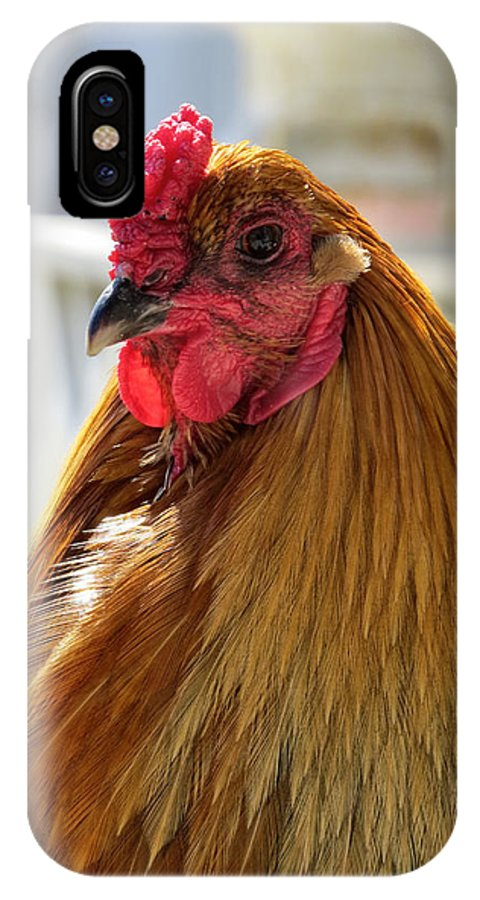 Chicken IPhone X Case featuring the photograph Spring Chicken by Art Dingo