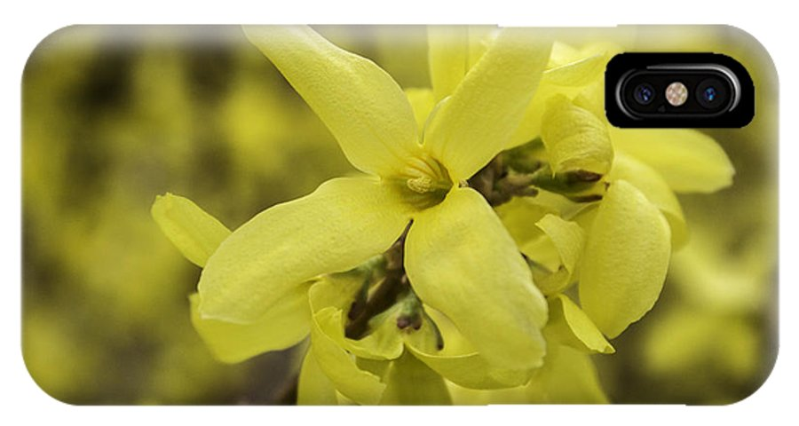 Yellow IPhone X Case featuring the photograph Spring Comes Sofly by Arlene Carmel