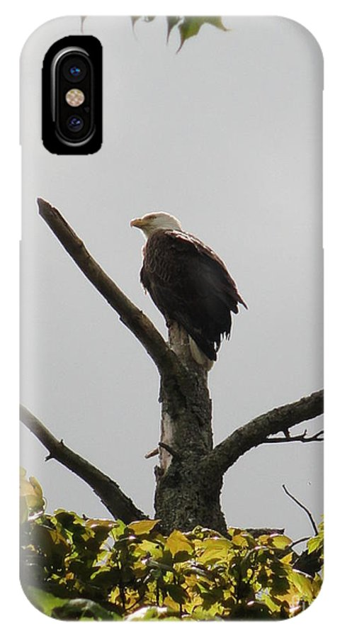 Spring IPhone X Case featuring the photograph Spring Eagle IIi by Daniel Henning