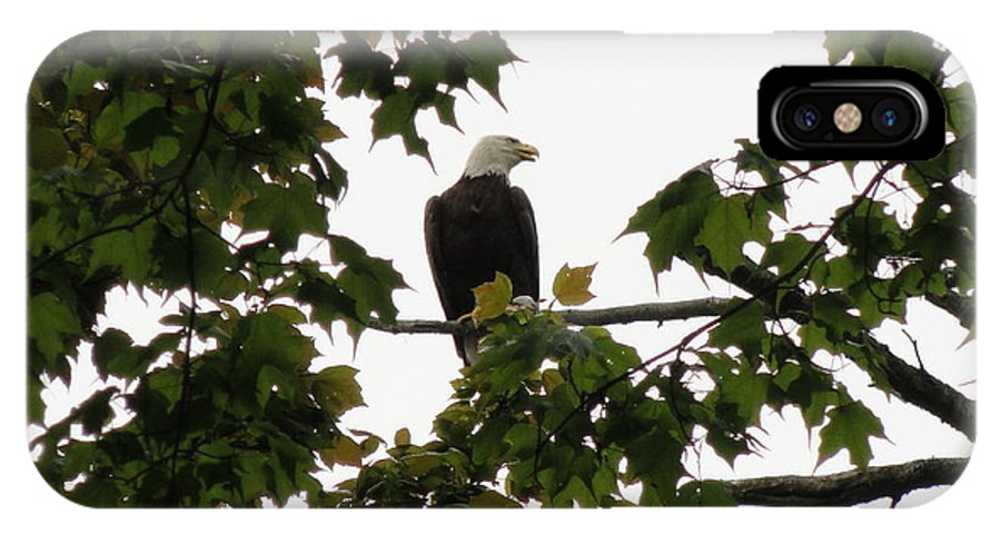 Spring Eagle Vi IPhone X Case featuring the photograph Spring Eagle Vi by Daniel Henning