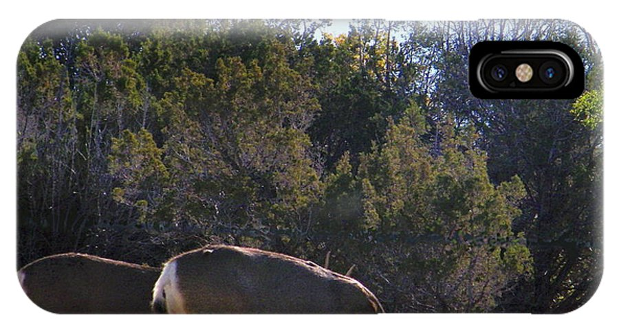 Deer IPhone X Case featuring the photograph Spring Grazing Mule Deer Bucks by Dale Jackson