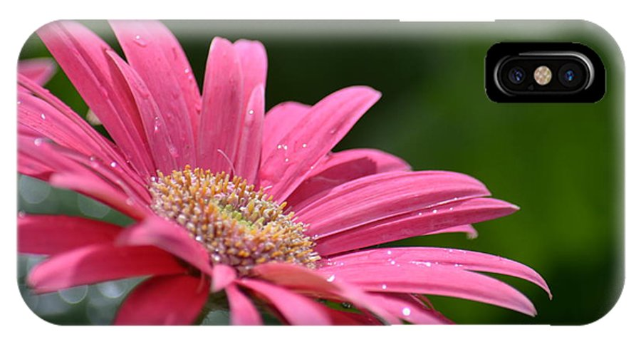 Spring Pink 2014 IPhone X Case featuring the photograph Spring Pink 2014 by Maria Urso