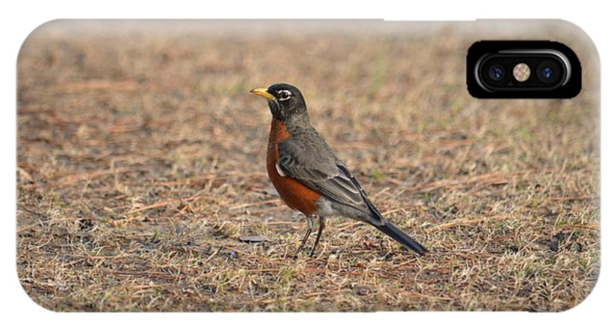 Spring Robin 2014 IPhone X Case featuring the photograph Spring Robin 2014 by Maria Urso