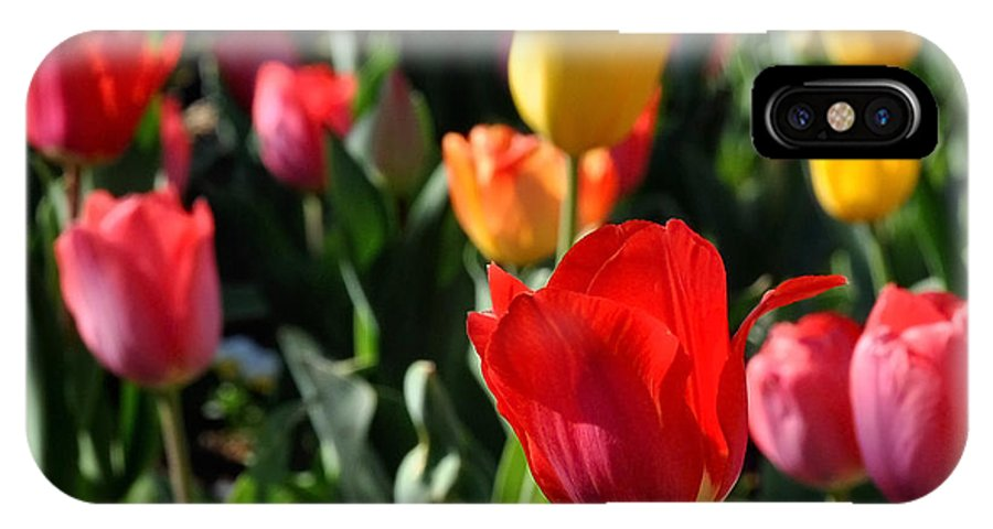 Nature IPhone X Case featuring the photograph Spring Tulip Garden by Nava Thompson