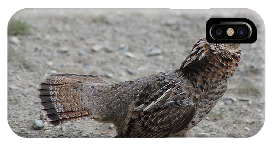 Wildlife IPhone X / XS Case featuring the photograph Spruce Grouse by Stephen Dyck