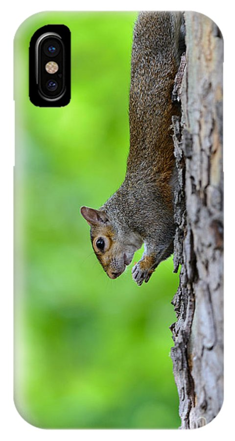Squirrel IPhone X Case featuring the photograph Squirrel In A Tree by Matt Malloy