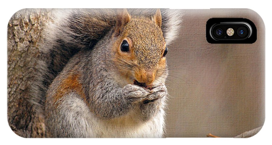 Squirrel IPhone X Case featuring the photograph Squirrel by Kerri Farley