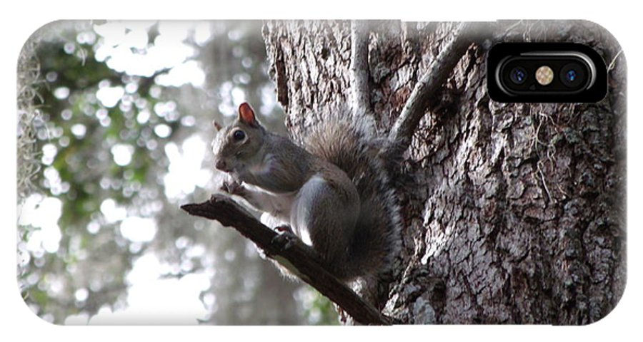 Lisa Williams IPhone X Case featuring the photograph Squirrel On A Stick by Lisa Williams