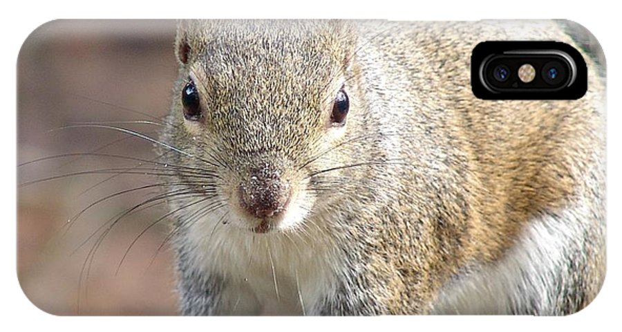 Squirrel IPhone X Case featuring the photograph Squirrel Profile by Ian Mcadie