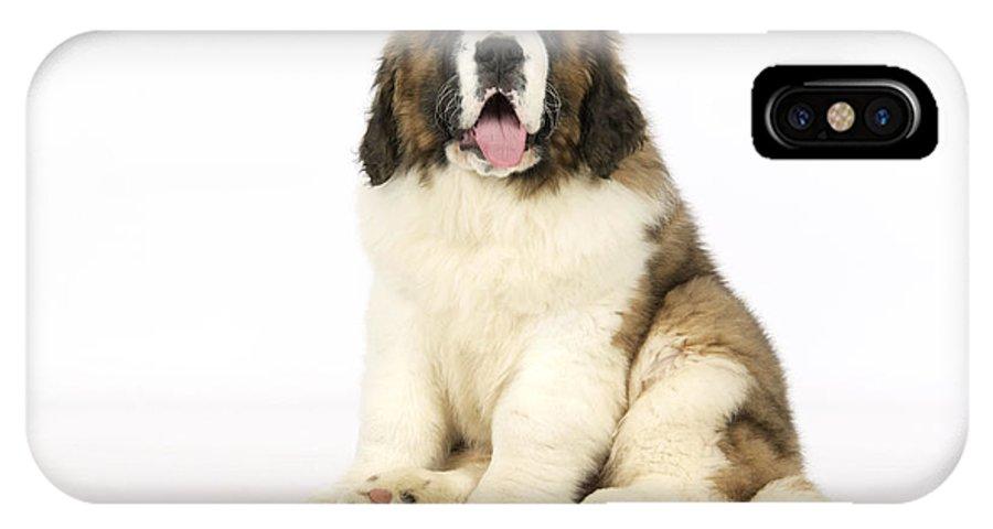 St Bernard IPhone X / XS Case featuring the photograph St Bernard Dog by John Daniels