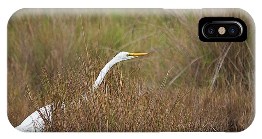 Wildlife IPhone X Case featuring the photograph Stalking by Kenneth Albin