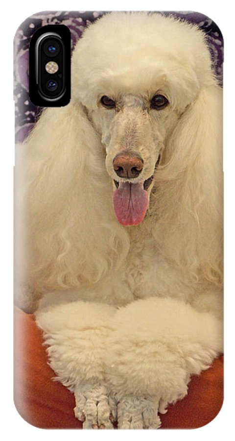 Poodle IPhone X Case featuring the photograph Standard Poodle by Diane Grindol