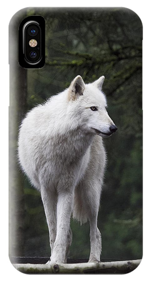 Wolf IPhone X Case featuring the photograph Standing Guard by Elvira Butler