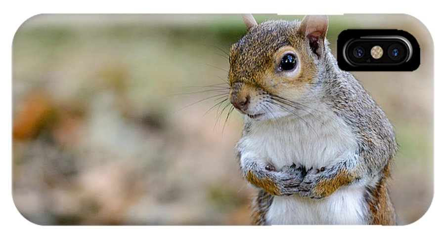 Standing IPhone X Case featuring the photograph Standing Squirrel by Matt Malloy
