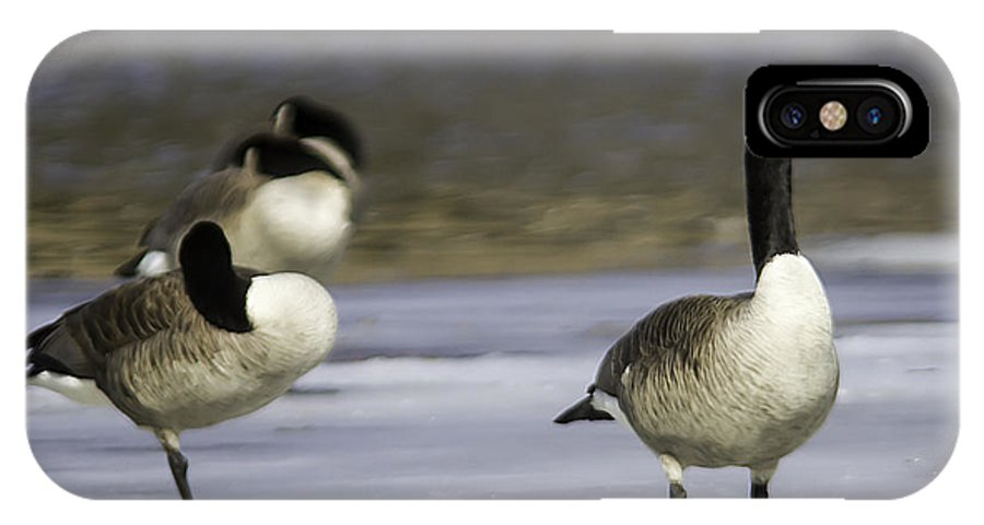 Canada Geese; Goose; Bird; Animal; Waterfowl; Ice; Spring Migration IPhone X Case featuring the photograph Standing Watch by Kevin Snider