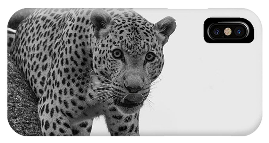 Leopard IPhone X Case featuring the photograph Stare by Kobus Van der Merwe