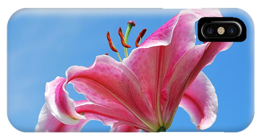 Nature IPhone X Case featuring the photograph Stargazer Lily Series 3 Of 4 by May Photography