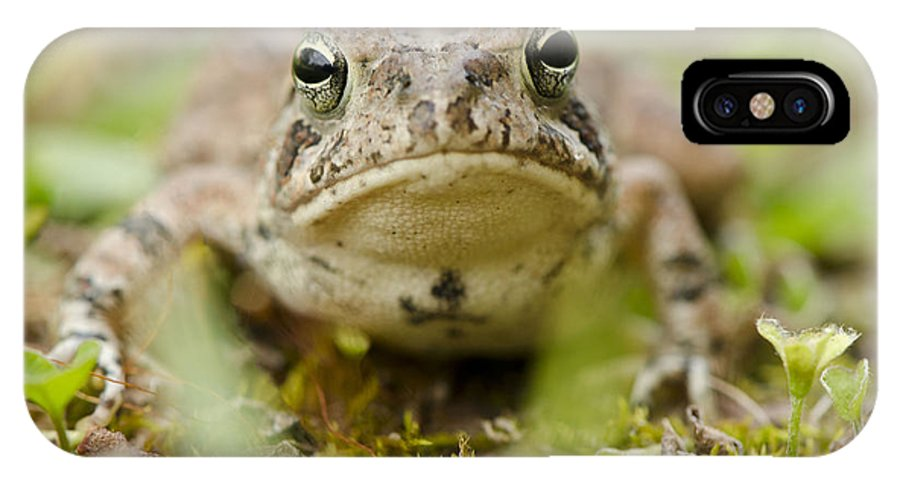 Frog IPhone X Case featuring the photograph Staring Contest by Julie Wynn