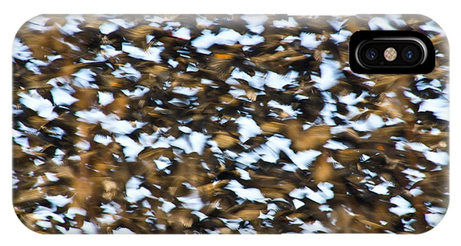 Great Blue Heron Photographs IPhone X Case featuring the photograph Starling Swarm by Vernis Maxwell