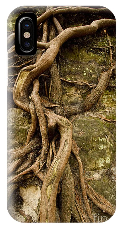 Curling Roots IPhone X Case featuring the photograph State Park Roots by Sara Schroeder