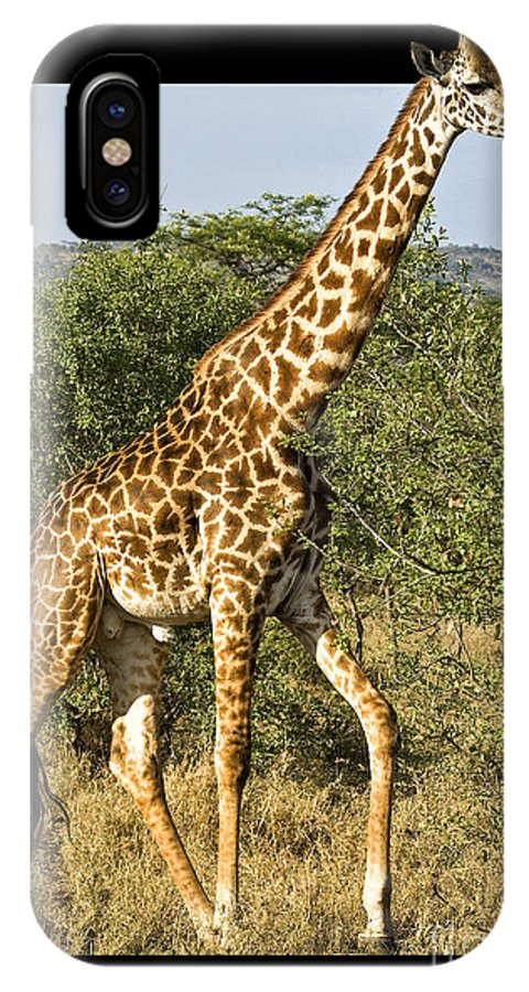 Africa IPhone X Case featuring the photograph Steppin Out by Timothy Hacker