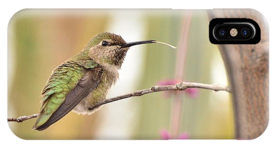 Hummingbird IPhone X Case featuring the photograph Sticking Out My Tongue At You by Debby Pueschel