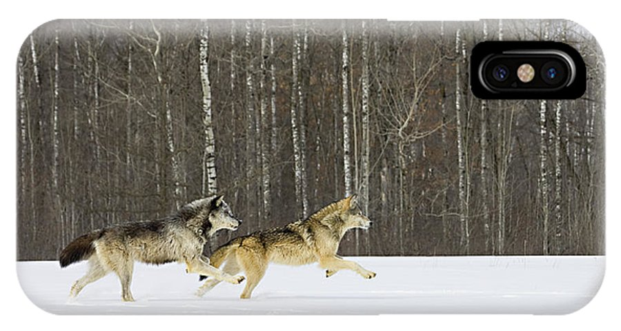 Wolf IPhone X Case featuring the photograph Still Competing by Jack Milchanowski