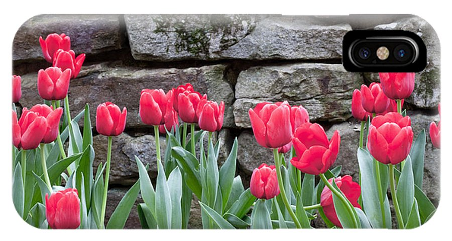 Red Tulips IPhone X Case featuring the photograph Stoned Tulips by Robert Camp