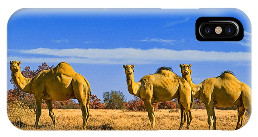 Feral Camels IPhone X Case featuring the photograph Stop And Stare V2 by Douglas Barnard