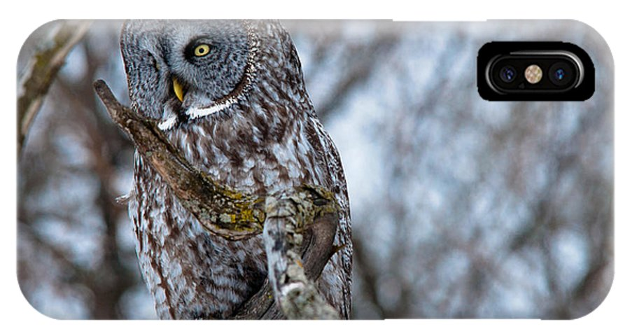 Owls IPhone X Case featuring the photograph Stunning Beauty by Cheryl Baxter