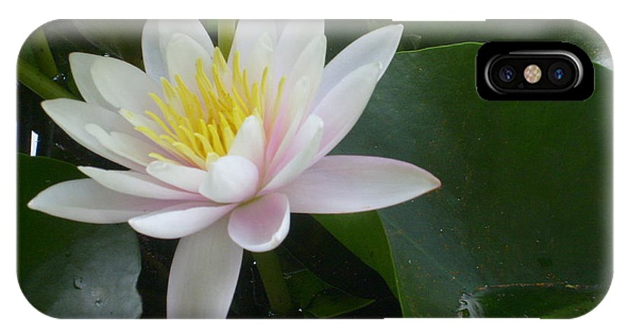 Water Lily Framed Print IPhone X Case featuring the photograph Summer Fun by Ann Willmore
