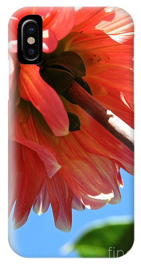 Flower IPhone X Case featuring the photograph Summer's End Dahlia by Susan Herber