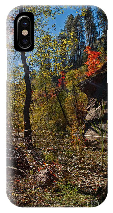 West Fork Trail IPhone X Case featuring the photograph Sun And The Tree by Brian Lambert
