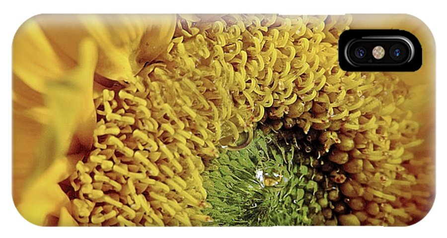 Sunflower IPhone X Case featuring the photograph Sun Drop by Bret Hunter