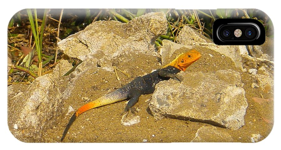 Colorful IPhone X Case featuring the photograph Sunbathing Lizard by Latisha Wolf