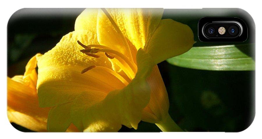 Day Lily IPhone X Case featuring the photograph Sunbeam by Terri Waselchuk