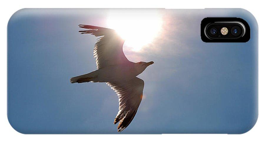 Bird IPhone X Case featuring the photograph Sunbird by Juraj Skodler