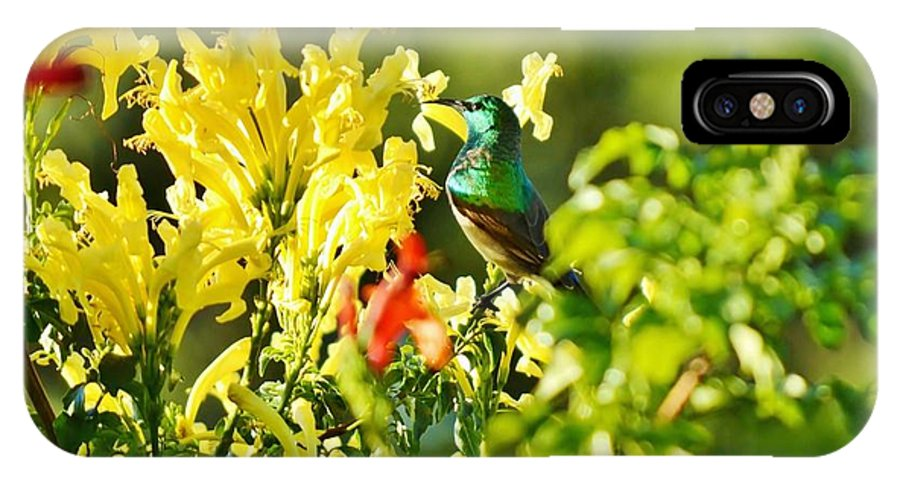 Cape Honeysuckle; Tecoma Capensis; Plant; Bush; Garden; Autum; Blue; Yellow; Nature; Bird; Background; Sunbird; Animal; Red; Feathers; IPhone X Case featuring the photograph Sunbird by Werner Lehmann