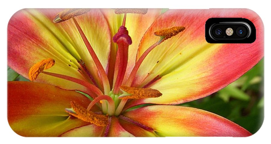 Asiatic Lily IPhone X Case featuring the photograph Sunburst by Terri Waselchuk