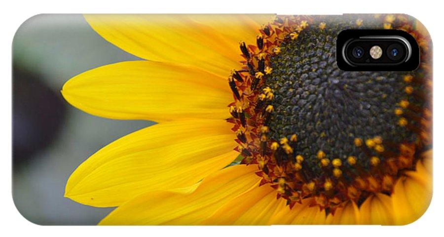 Sunflower IPhone X Case featuring the photograph Sunflower by Amanda Raba Johnson