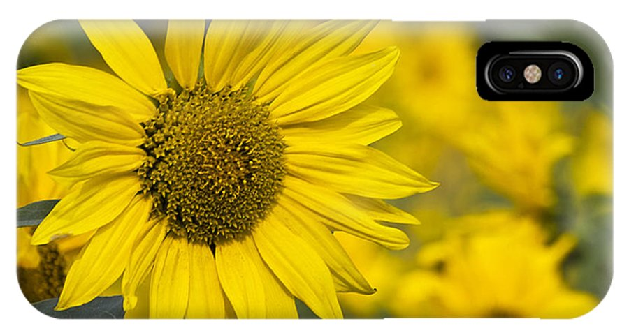 Sunflower IPhone X Case featuring the photograph Sunflower Blossom by Heiko Koehrer-Wagner