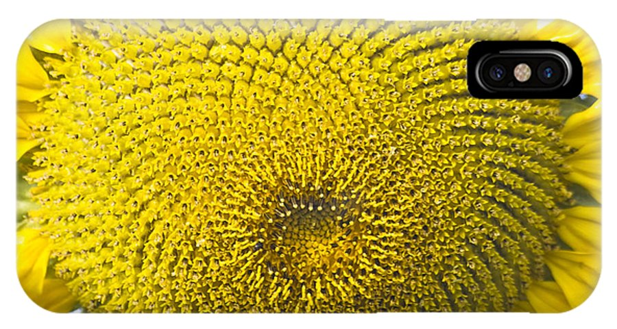 Nature IPhone X Case featuring the photograph Sunflower Buzz by Heiko Koehrer-Wagner