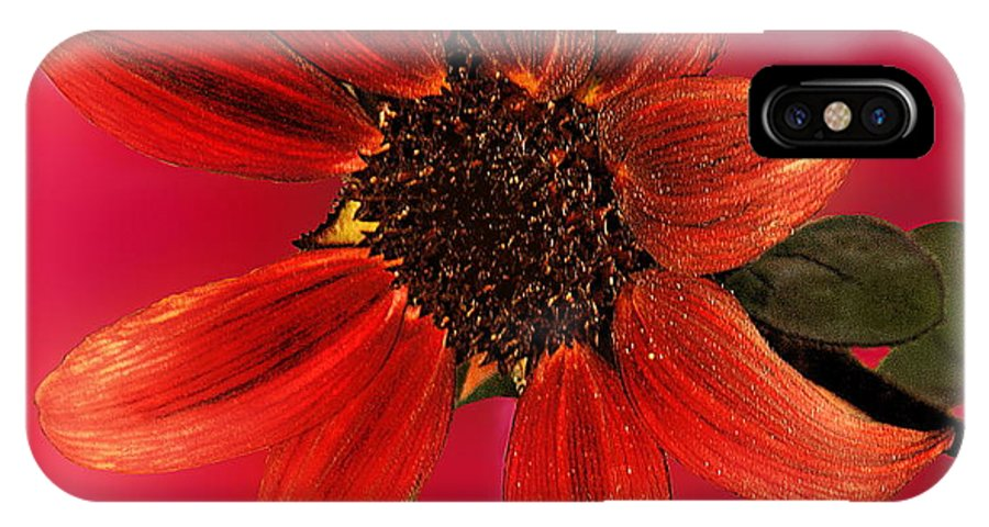 Nature IPhone X Case featuring the photograph Sunflower in Red by Viktor Savchenko