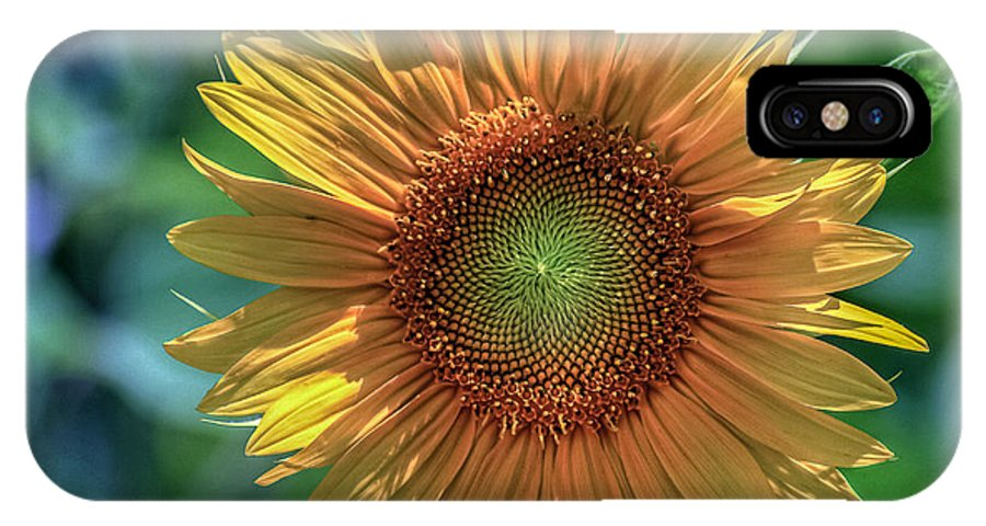 Norfolk Botanical Garden IPhone X Case featuring the photograph Sunflower by Jerry Gammon