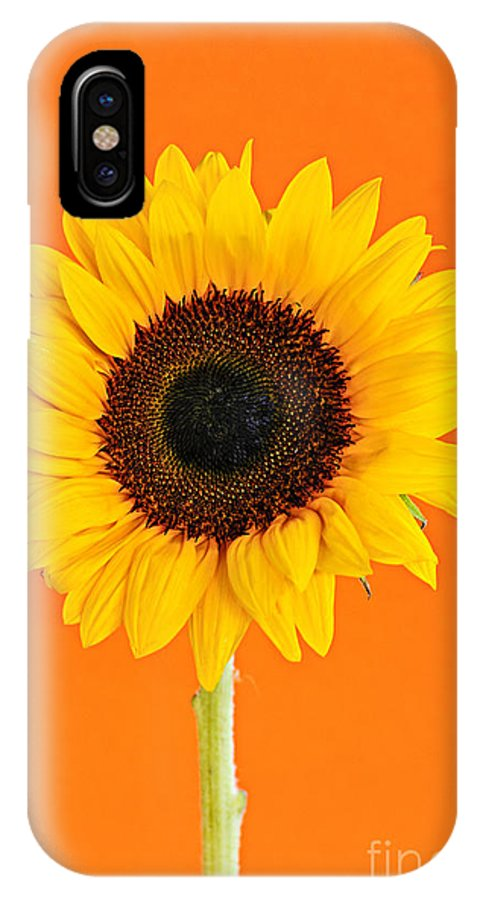 Sunflower IPhone X Case featuring the photograph Sunflower On Orange by Elena Elisseeva