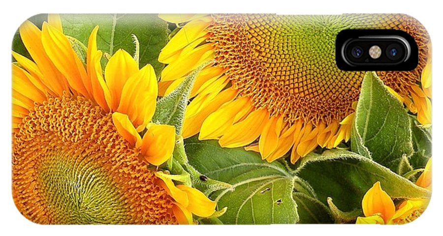 Sunflower IPhone X Case featuring the photograph Sunflower Smiles by Kim Bemis