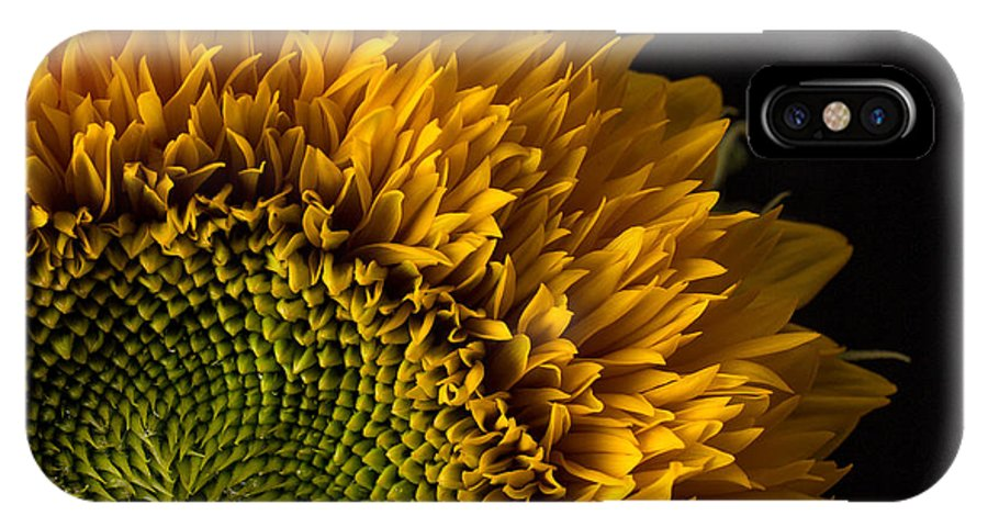 Flower IPhone X Case featuring the photograph Sunflower Square by Edward Fielding